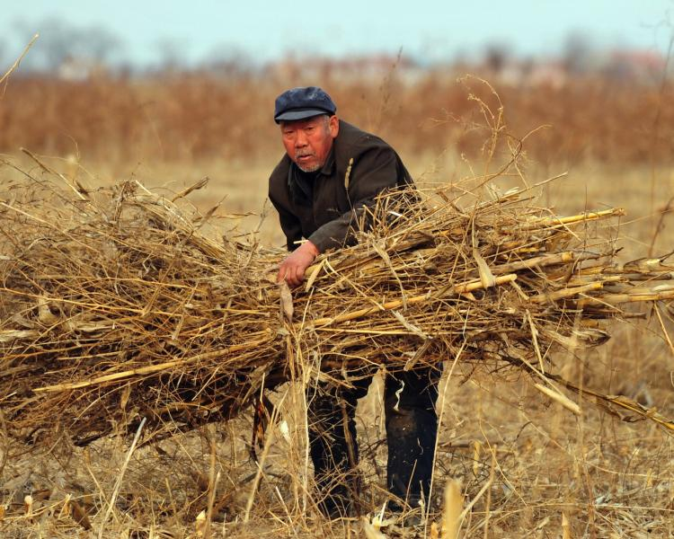 COSTLY TOIL: A farmer bundles dried stalks of wheat in a field in Cangzhou, in China's Hebei Province February 2009. Grain prices are expected to rise presenting China's Communist Party with a dilemma. If the CCP lets the price rise, the urban poor will be negatively affected, if it artificially lowers prices, farmers will face inflation. (Frederic J. Brown/Getty Images)