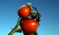 Rosehips for 'Get up and go'