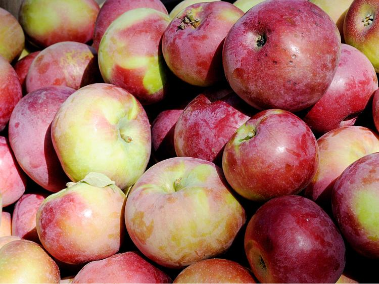 INFLATION: The price of apples have gone up by 47 percent since the last decade, yet unemployment benefits have remained nearly the same. (Epoch Times Staff)