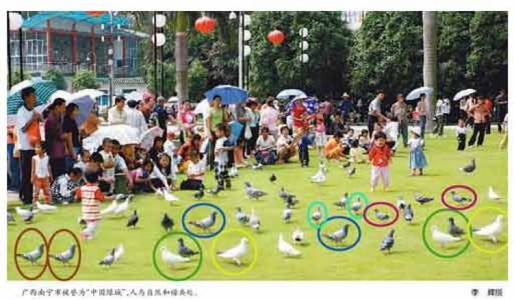 The Photoshopped image from the People's Daily, with pigeons duplicated within the same photo, coloration unaltered. (q.sohu.com)