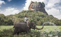 Elephant Loss Could Change Landscape Forever