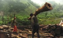 Extensive Logging in the Name of 'Forest Restoration' Threatens Natural Habitat of Pandas