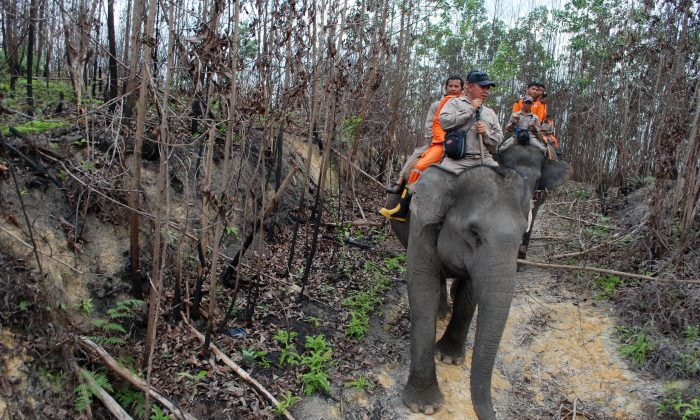 Rangers and fire fighters patrol an area affected by forest fires in Kampar, Riau province, Indonesia, on Nov. 10, 2015. (AP Photo/Rony Muharrman)