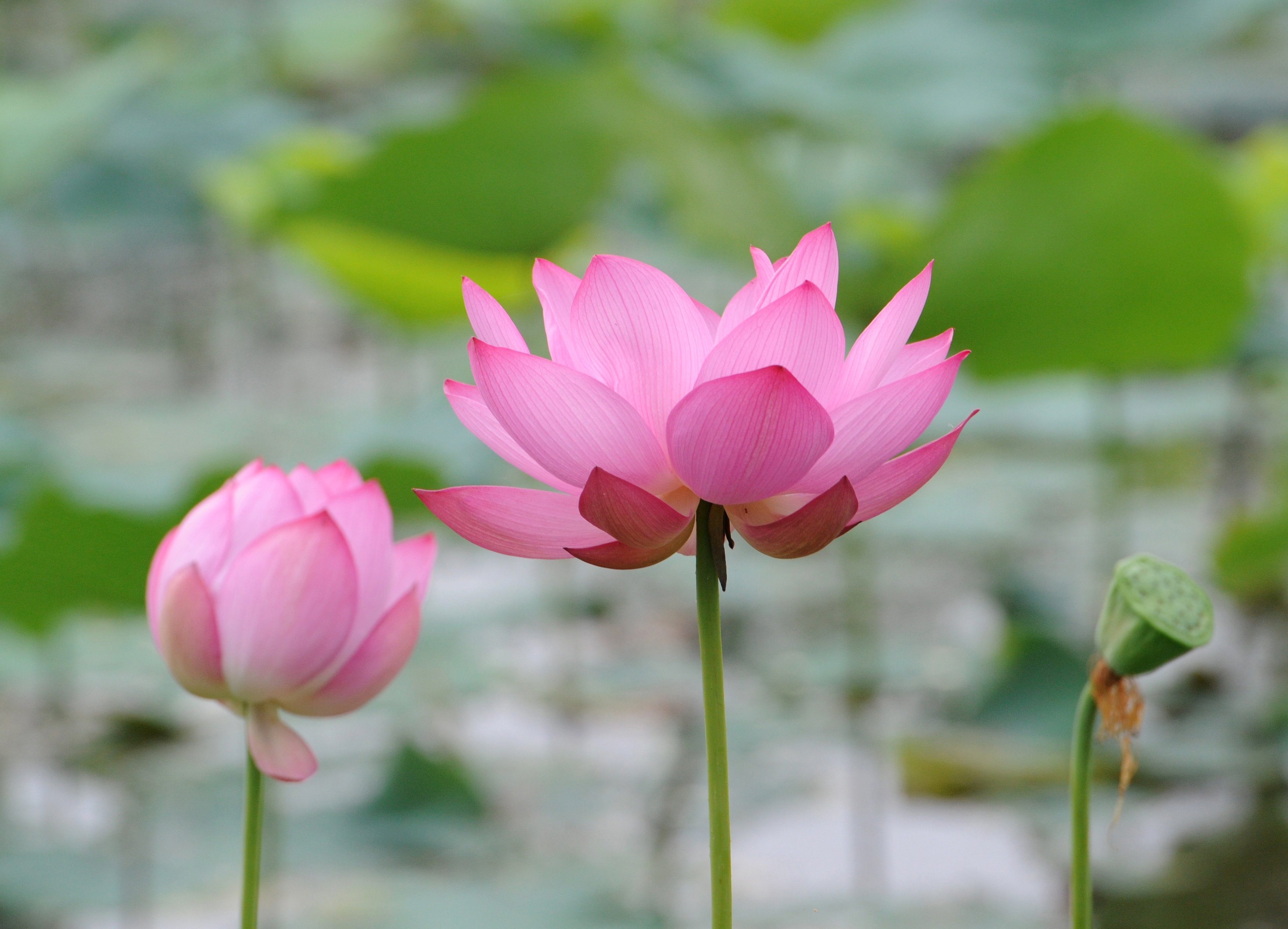 20 Year Old Chinese Man Put On Trial For Sharing Picture Of Lotus