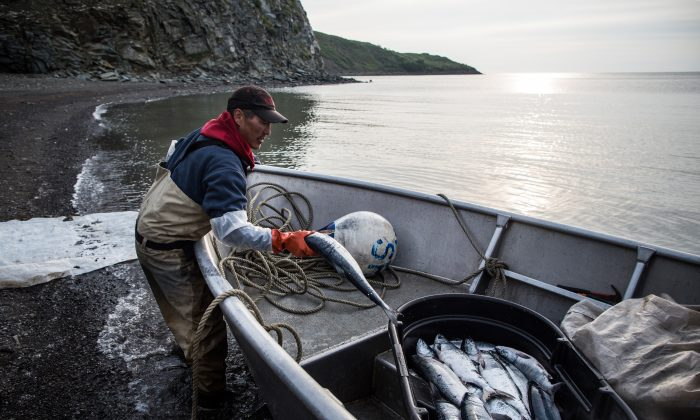 NEWTOK, AK - JULY 01: Joseph John Jr. washes freshly caught salmon with his son, Jeremiah John, while waiting for the tide to come in on July 1, 2015 in Newtok, Alaska. (Andrew Burton/Getty Images)