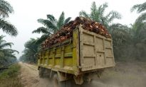 Indonesia, Malaysia Form OPEC-Like Palm Oil Council