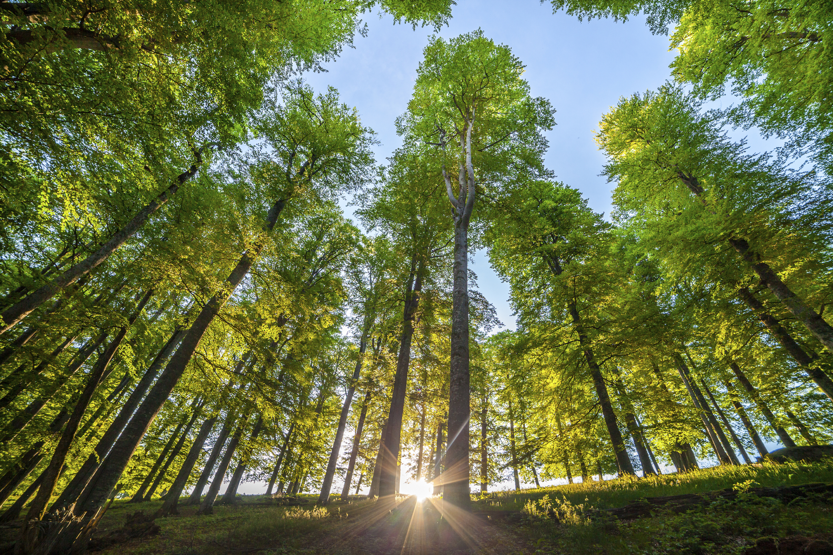 Can Trees Really Cool Our Cities Down?