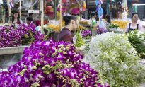 Illegal Plant Trade Blooms in Southeast Asia