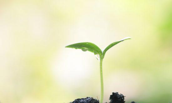 Are Plants Conscious, Intelligent?