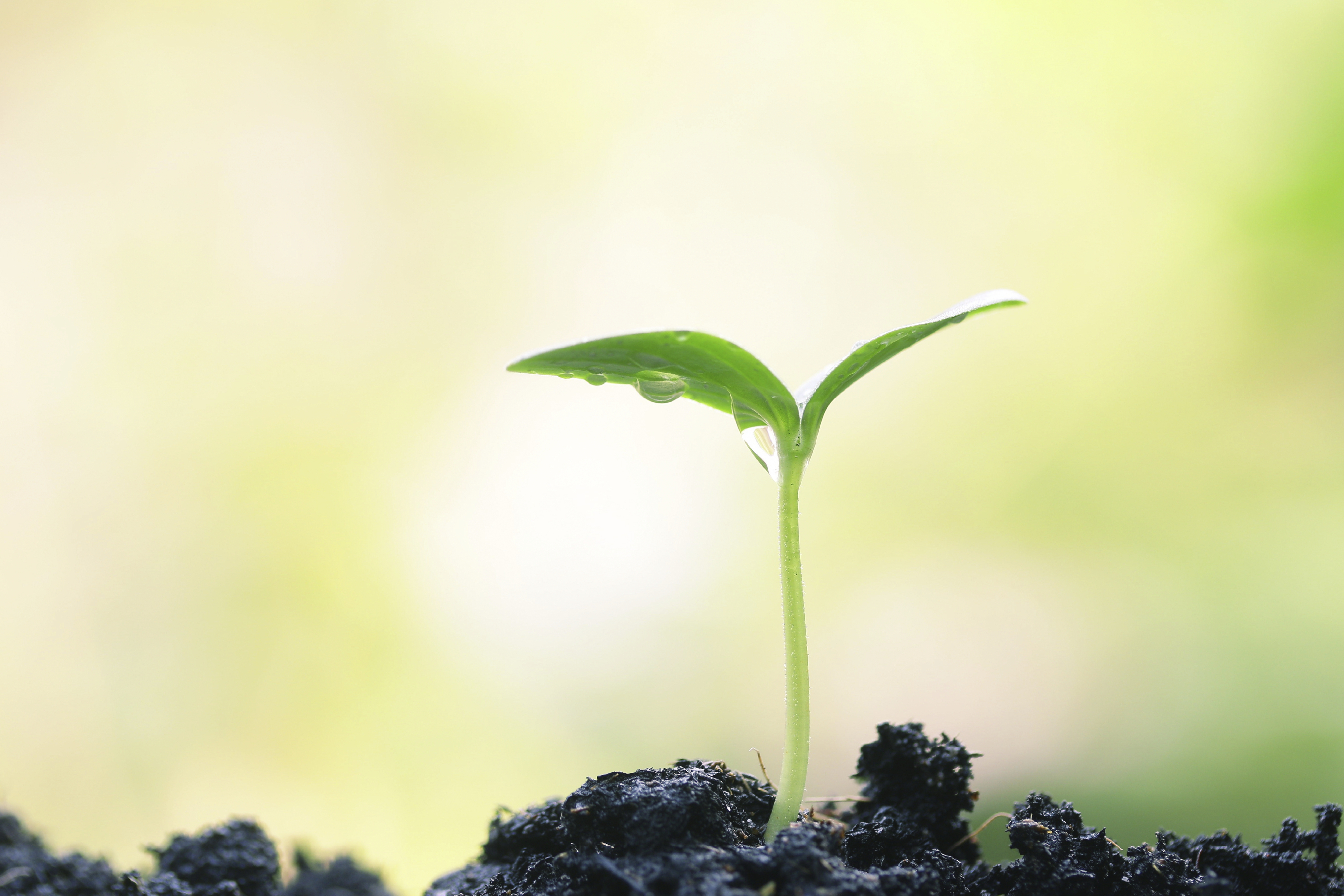 Plants can count—the mounting evidence that plants are conscious