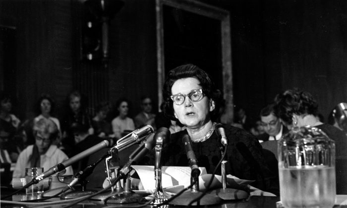 """Activist and author Rachel Louise Carson, whose book """"Silent Spring"""" led to a study of pesticides, testifies before a Senate Government Operations Subcommittee in Washington, D.C., on June 4, 1963. Carson urged Congress to curb the sale of chemical pesticides and aerial spraying. (AP Photo)"""