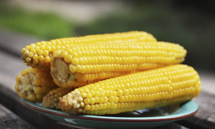 Boiled corn on a plate in the garden