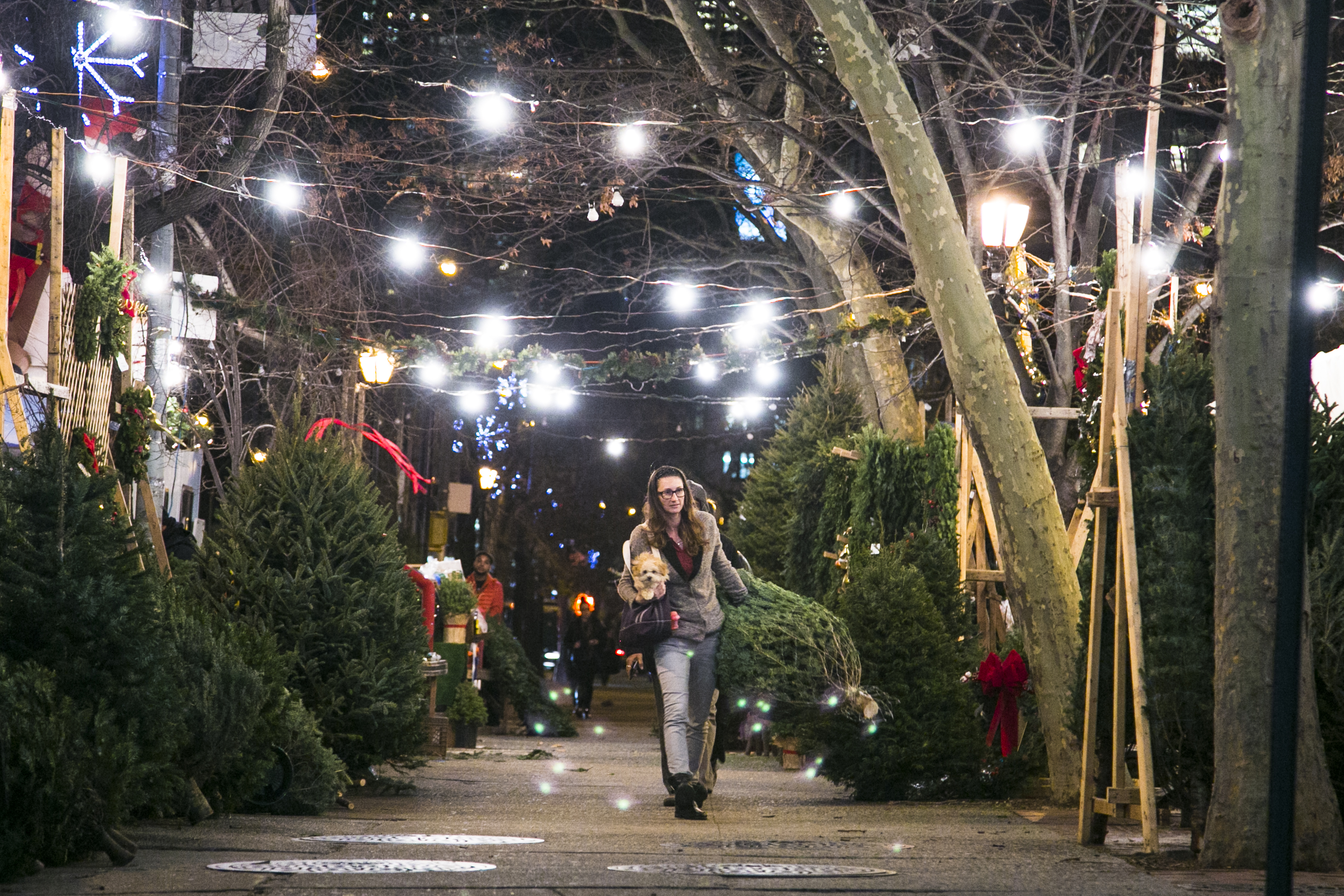 a peek behind the curtain at new yorks christmas tree trade - New York Christmas