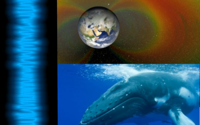 """Left: The waves of the """"song"""" captured by NASA probes in the Van Allen belts on Sept. 5, 2012. (NASA) Top right: An artist's depiction of the Van Allen belts surrounding Earth. Bottom right: A humpback whale. (Miblue5/iStock)"""