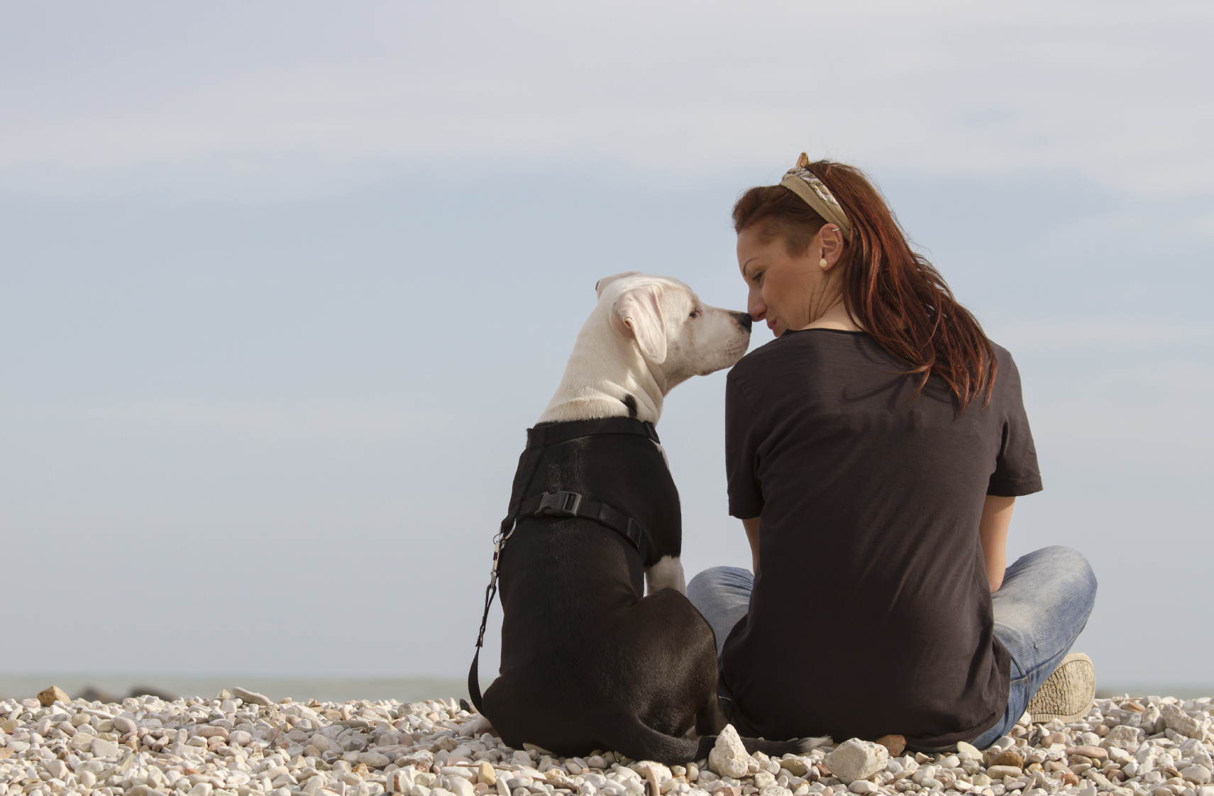 Man's Best Friend Can Save Your Life From Cancer! Dogs Detect Cancer With 90 Percent Accuracy