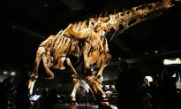 Scientists Think They Found a 'Pregnant' T. Rex Fossil