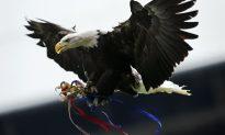 Watch: Dutch Police Eagle Takes Down a Drone