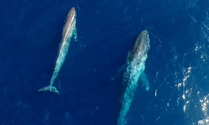 Screenshot: YouTube/Sea Shepherd