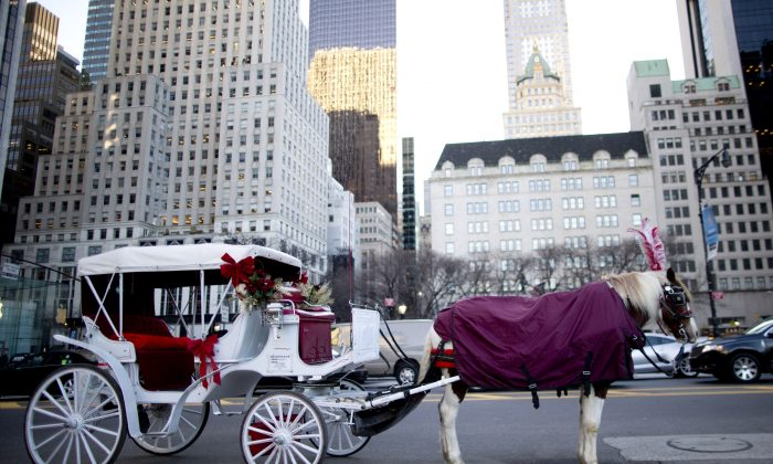 FILE - In this Jan. 13, 2016 file  photo, a carriage horse is covered in a blanket as it waits for customers on Central Park South in New York.  (AP Photo/Mary Altaffer, File)
