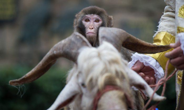 (Johannes Eisele/AFP/Getty Images)