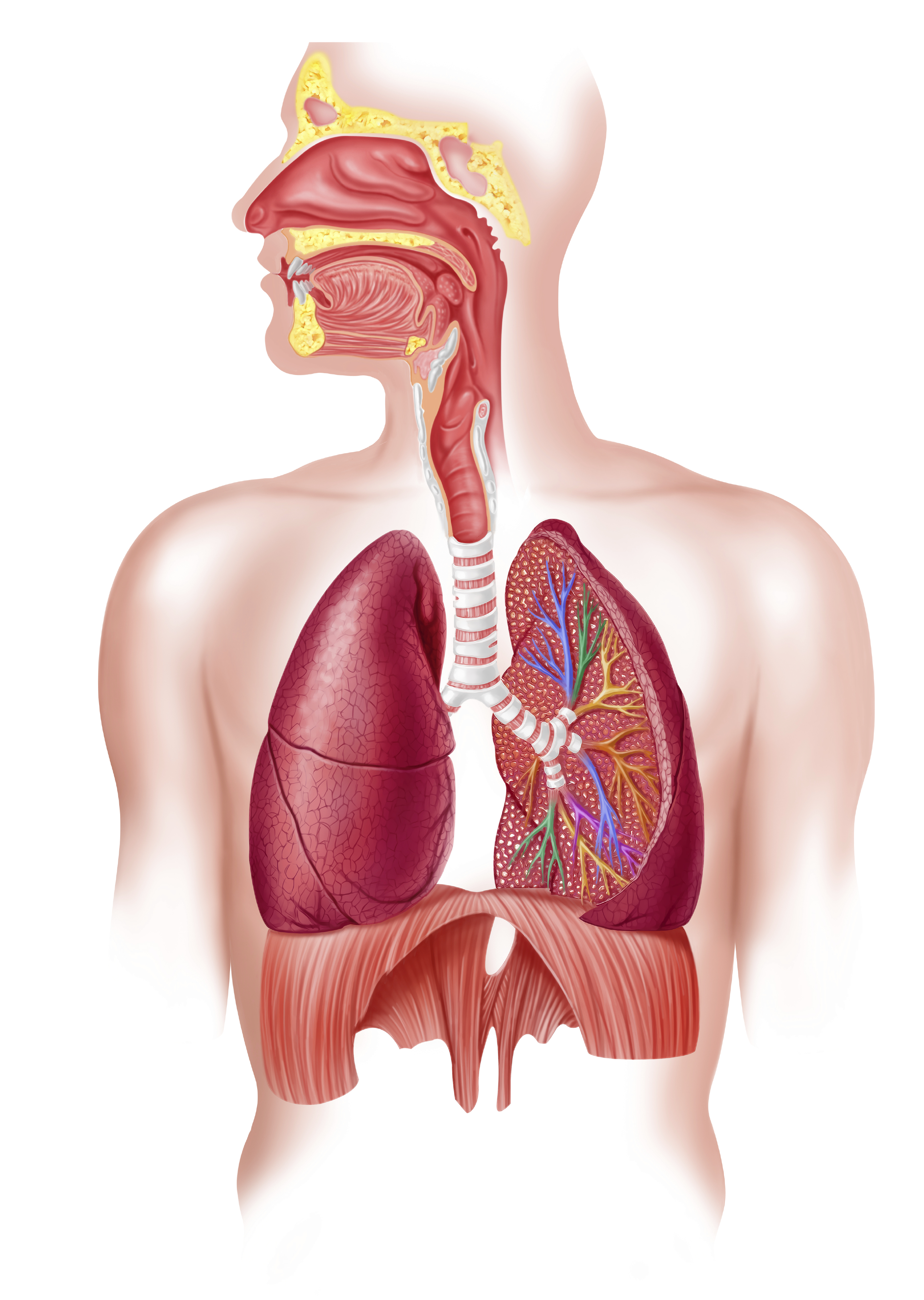 secrets of korean medicine part 16 the benefits of cleaning your lungs prevention. Black Bedroom Furniture Sets. Home Design Ideas
