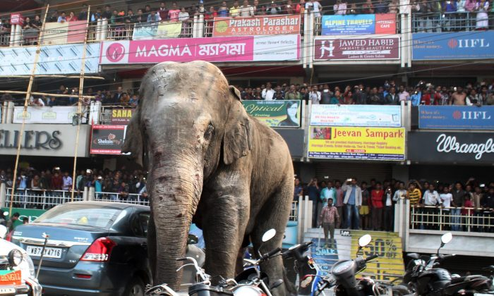 Indian bystanders watch as a wild elephant walks along a busy street in Siliguri on February 10, 2016. (Diptendu Dutta/AFP/Getty Images)