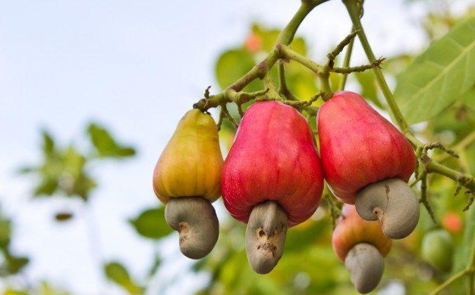 (Cashew via Shutterstock)