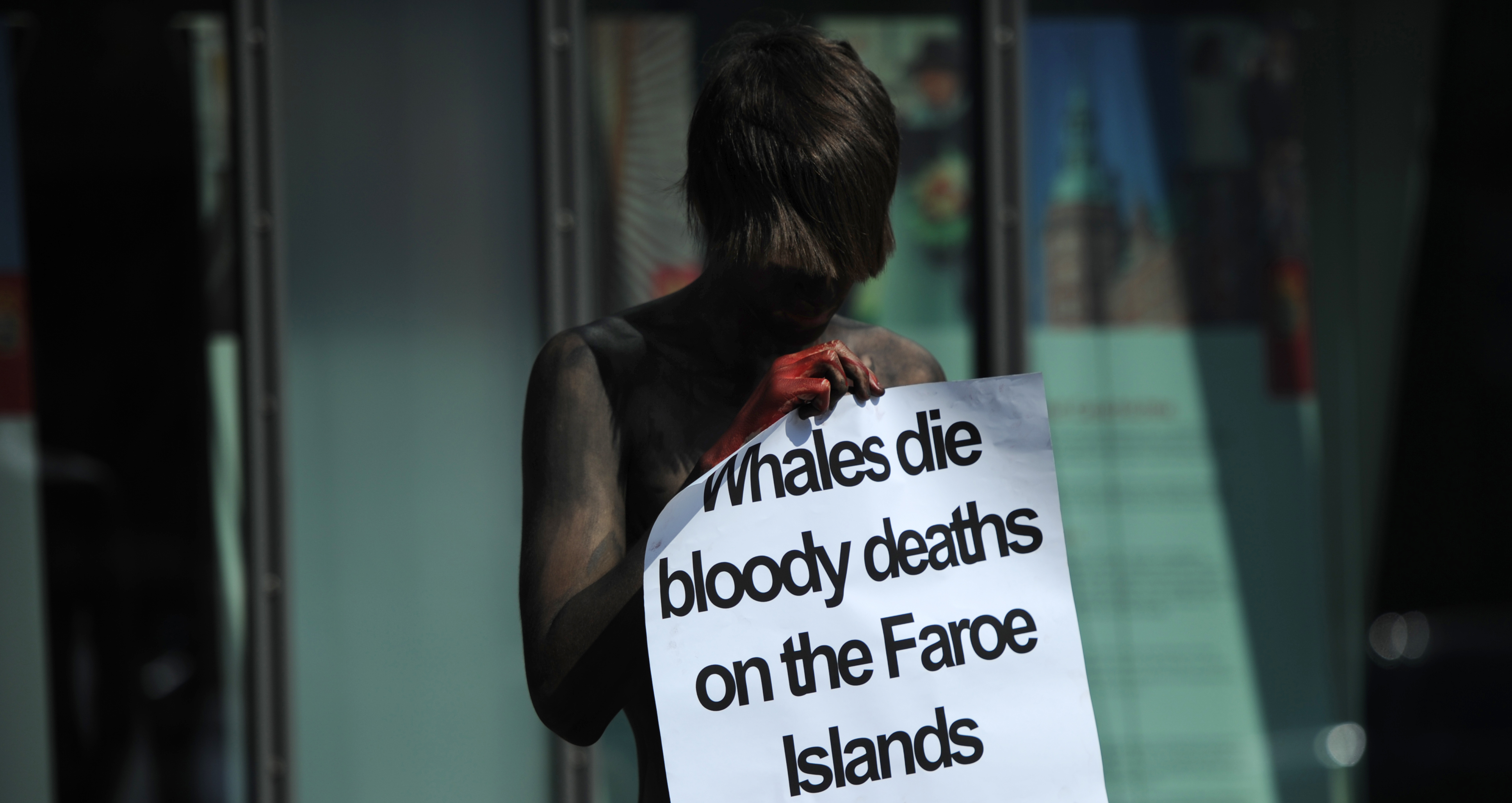 Bloody Photos Show Mass Slaughter of Whales in the Faroe Islands