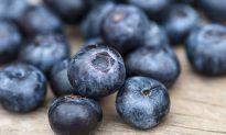 Blueberries Increase Immunity and Reduce Blood Pressure