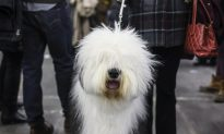 H3N2 Dog Flu Cases Reported Across Two Dozen U.S. States