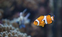 Do Fish Have Feelings? Maybe…
