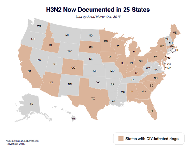 New Strain of H3N2 Dog Flu Spreads Across the US Reports Say