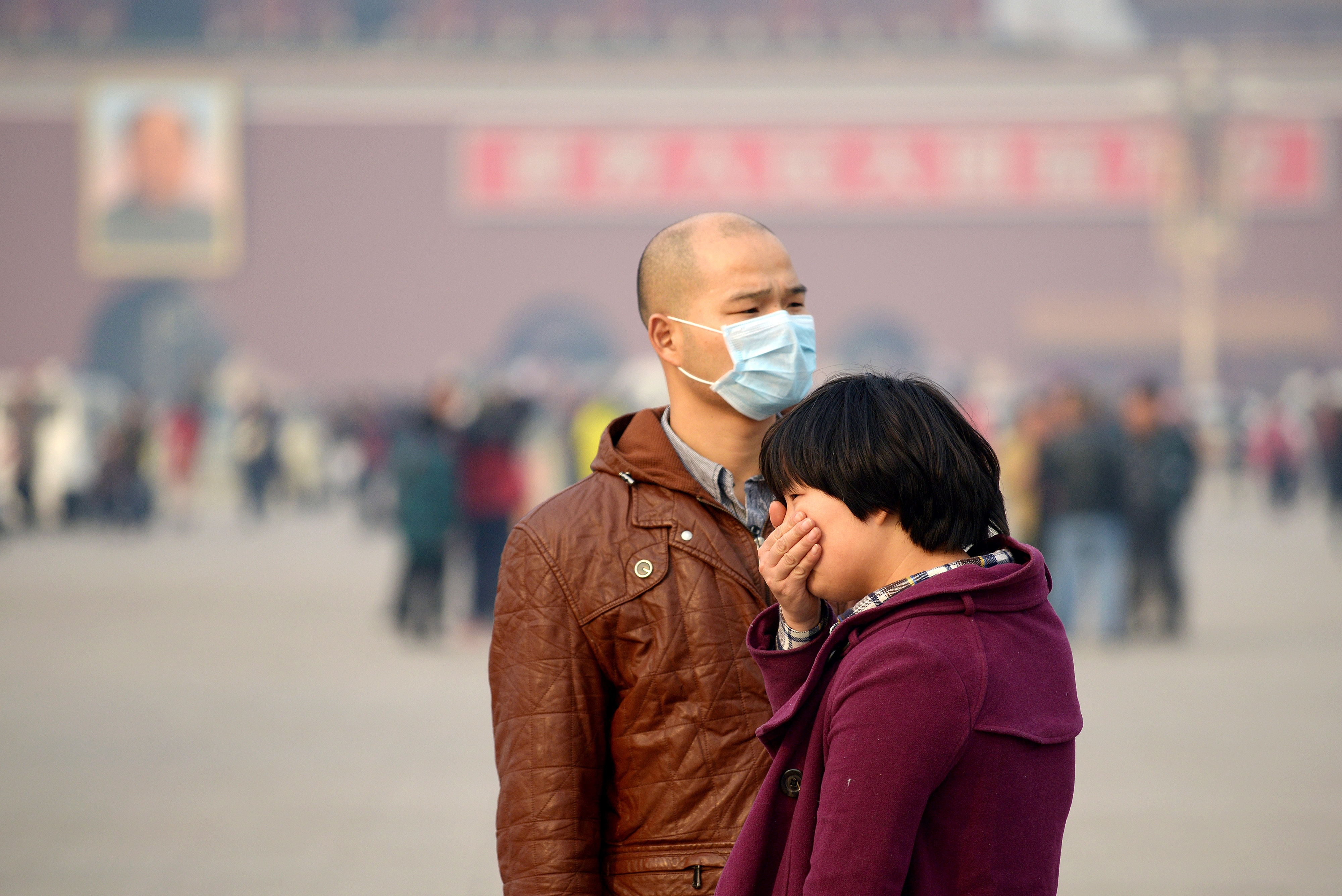 Rats Gain Weight After Breathing Beijing's Air for 3 Weeks