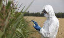 California Declares Roundup Pesticide Cancerous