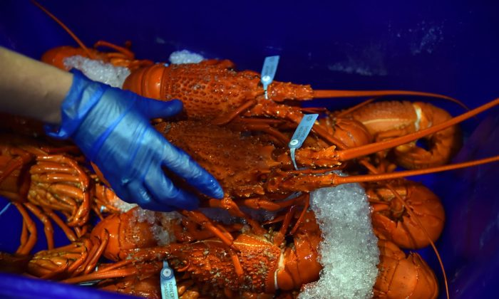 Photo taken early on December 23, 2014 shows cooked lobsters for sale in the auction house at the Sydney Fish Market in Sydney. (PETER PARKS/AFP/Getty Images)