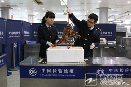 Customs staff in Ningbo, China, hold the lobster. (Sina Weibo)