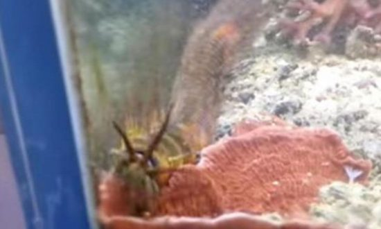 Man Finds a 3-Foot-Long Worm In His Fish Tank