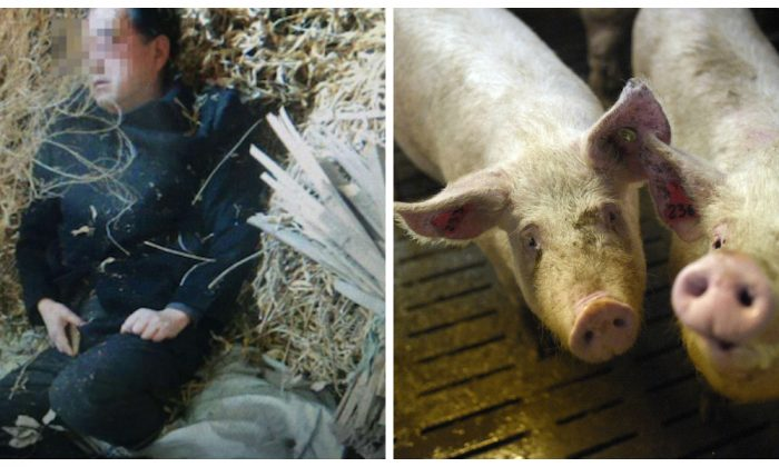 The suspected photograph of Tang asleep in a pig pen after the hit-and-run was widely circulated on the Chinese Internet. (Weibo.com)