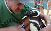 Biologist Joao Paulo Krajewski Says the 'Penguin Story' That Went Viral, Has Some Misconceptions
