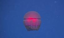 Deep Sea Exploration Crew Finds Bizarre Creatures (Video)