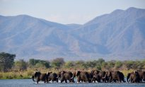 Zimbabwe: The Comeback Country