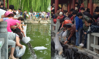 Chinese Netizens Heap Criticism on Man Who Adopts Puppies to Feed His Pet Snake