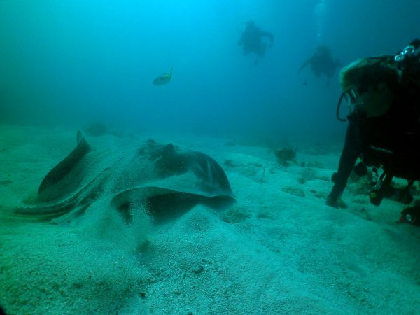 Sea Monkeys dive guide Colleen Strayer with an Atlantic stingray at Alligator Reef. (John Christopher Fine, Copyright 2016)