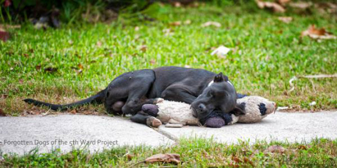 A dog sleeping with a teddy bear in the 5th Ward in Houston, Texas. (Courtesy of Yvette Holzbach/Forgotten Dogs of the 5th Ward Project)