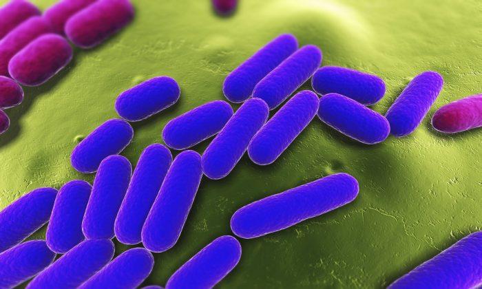 In our body, bacteria cells outnumber human cells ten to one. (Sebastian Kaulitzki/iStock)