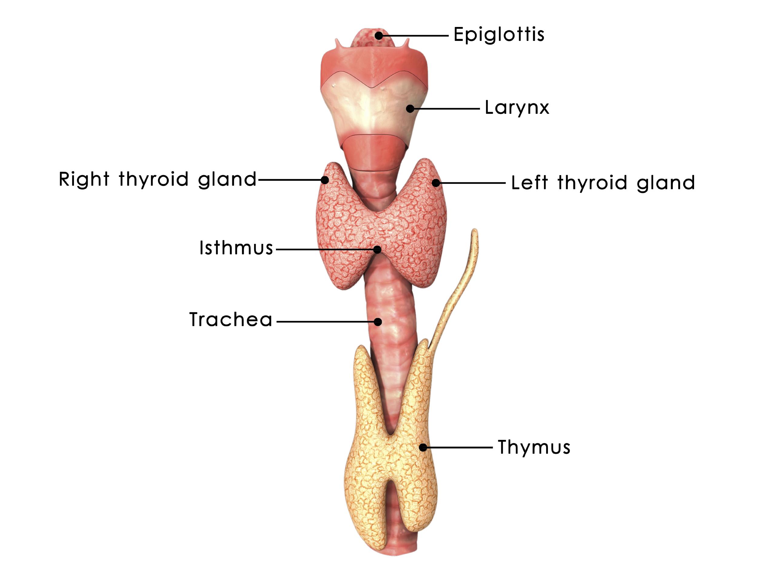 Secrets Of Korean Medicine Part 23 Thyroid Disease Can Be Fully
