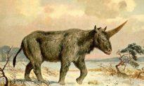 29,000-Year-Old 'Siberian Unicorn' Fossil Found