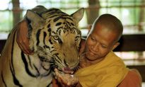 Florida Zookeeper Dies After Run-In With Tiger.