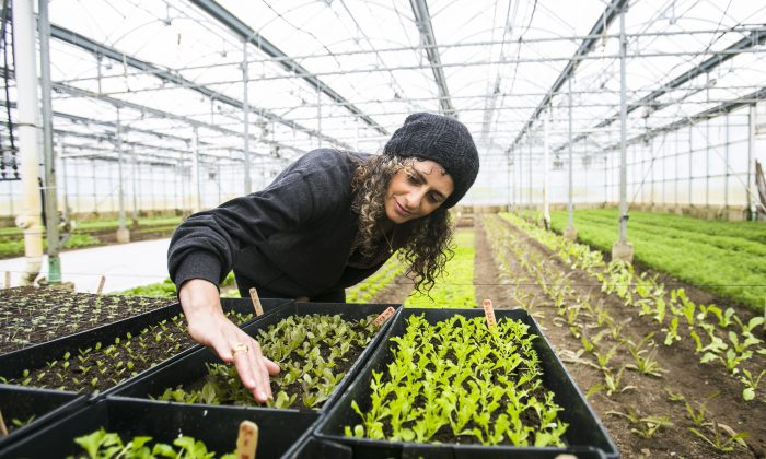 """Dr. Daphne Miller, author of """"Farmacology: Total Health from the Ground Up,"""" at Stone Barns Center for Food & Agriculture in Pocantico Hills, New York, April 7, 2016. (Samira Bouaou/Epoch Times)"""