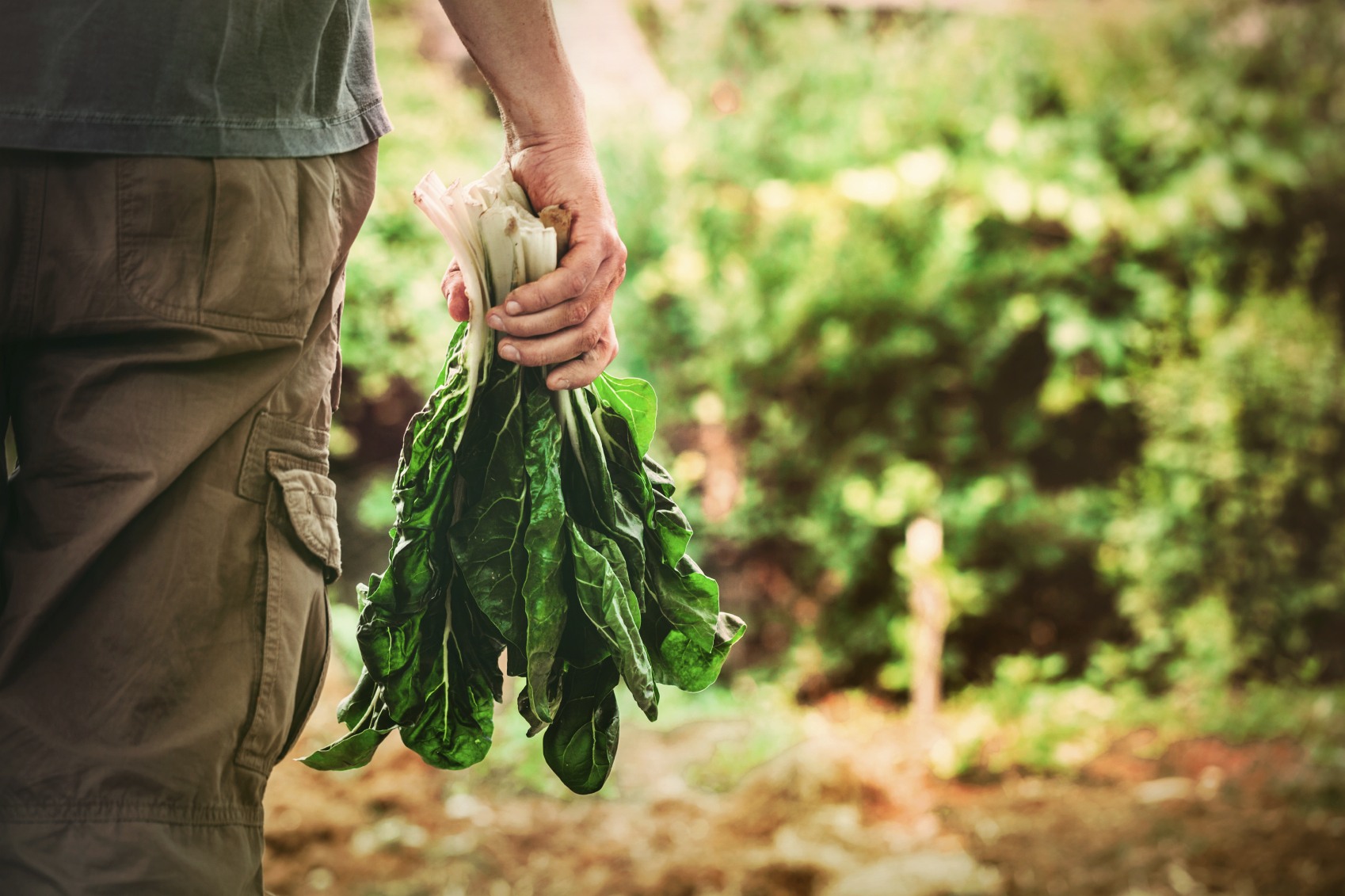 10 Protein-Packed Plant Foods